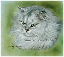 White Persian - click to view larger